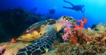 Tauchen auf den Similan Inseln