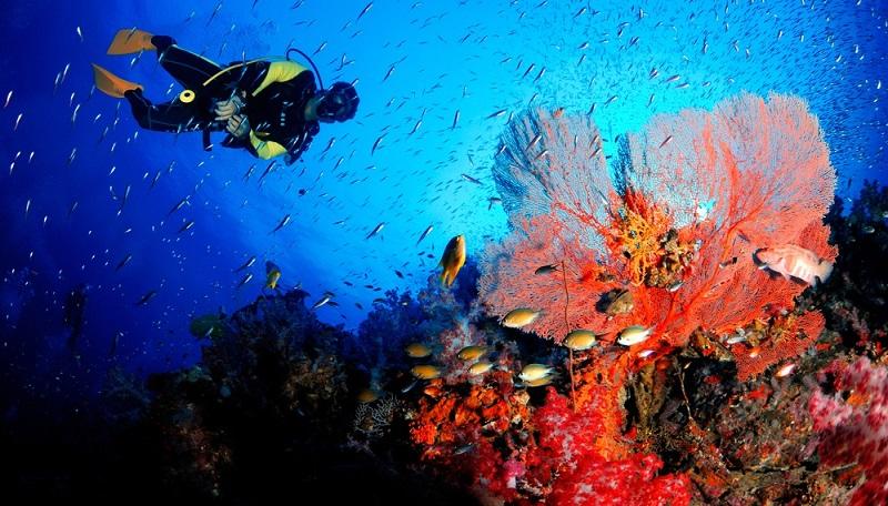 Die Unterwasserwelt ist ein Traum in allen erdenklichen Farben. Korallen in floralen bis bizarren Formen bilden dichte Meeresgärten.