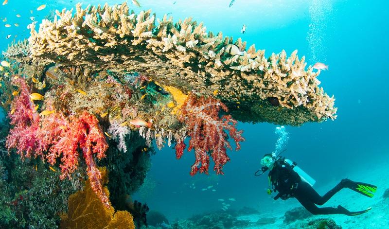 Das Archipel ist so herrlich und artenreich, dass Menschen aus allen Teilen der Erde zum Tauchen und Schnorcheln anreisen.